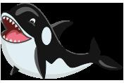 Ta Qali Pool Orca